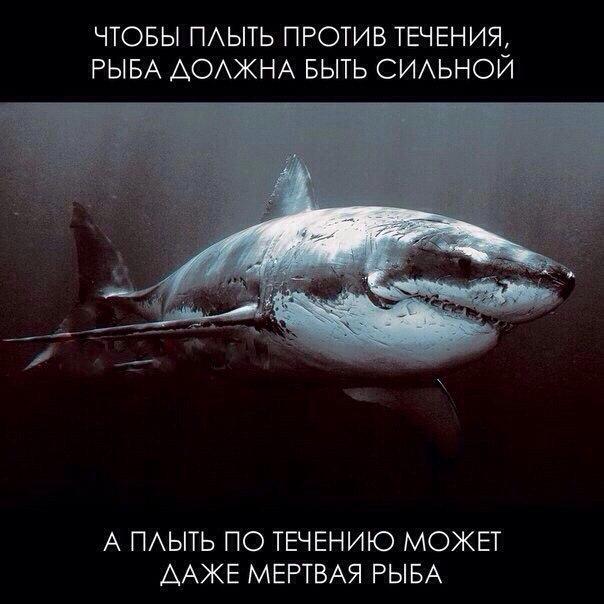 Чтобы плыть против течения, рыба должна быть сильной